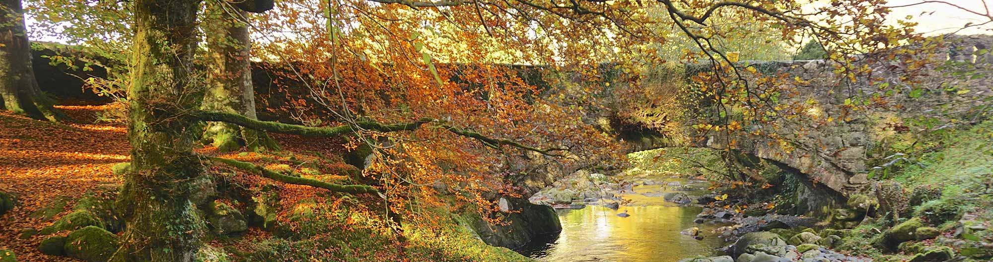 Torrent Walk in Autumn